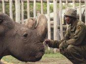 World's last male northern white rhino dies in Ol Pejeta Conservancy