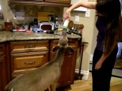 These women are unique as they invite a wild animal into their house
