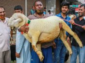 Ahead of Eid al-Adha, UP govt issues guidelines says,'No open sacrifice of animals'