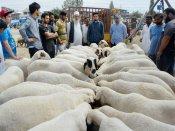 No animal sacrifice in open space on Bakrid rules Uttarakhand HC