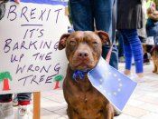 Why Britain's dogs are also protesting Brexit