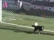 Video: Dog comes out of nowhere to save a goal in a football match in Argentina