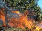 Uttarakhand battling with raging forest fires