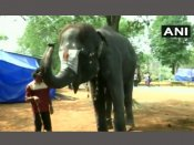 Video: This temple elephant in Tamil Nadu can play mouth organ with its trunk
