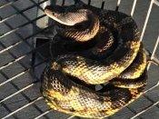 Snake on shopping cart surprises attendant