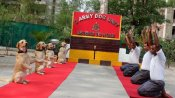 Don't miss this video of adorable Army dogs performing Yoga