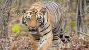 India's 1st tiger reserve hot air balloon safari in Madhya Pradesh