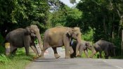 Human animal conflict, a real threat India cannot ignore