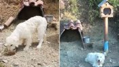 Loyal dog dubbed as 'Greek Hachiko' refuses to leave spot where owner died