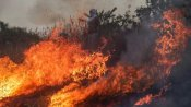 #PrayForAmazon: Record number burning in Brazil rainforest, could have global consequences