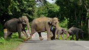 Why should we care what happens to elephants?