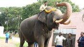 Mysuru Dasara: Do you know what the howdah elephant Arjuna eats?