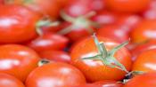 Now, tomato prices soar to Rs 80 per kg in Delhi