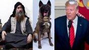 Hero dog Conan that helped kill Baghdadi meets Trump