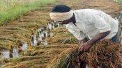 Centre hikes MSP for 14 Kharif crops
