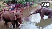 Death of pregnant elephant: FIR against unidentified persons