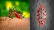 Covid and dengue 'co-infections' is the new concern in India