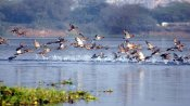 Okhla Bird Sanctuary to reopen after 5 months: All you need to know