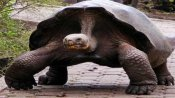 Giant Aldabra tortoise, worth Rs 15 lakh 'stolen' from Chennai Zoo; Probe on