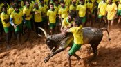 Tamil Nadu govt grants permission to hold Jallikattu event, with certain restrictions