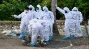 Bird flu scare: Six rosy starlings found dead in Rajkot