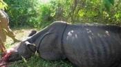 12 rhino poachers jailed in Nepal