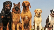 Unusual act: Spanish town grants cats, dogs equal rights as humans