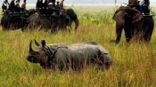 Assam: Another rhino killed in Assam's Kaziranga National Park