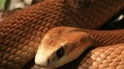 Shocking: Venomous snakes found in package at post office in US