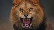 Bizarre! Lions taken into custody for murder of three persons in Gujarat