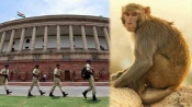 When a monkey spent 30 minutes in Parliament!