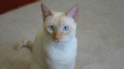 2 Guwahati cats in final of PETA rescued cat contest