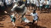 Jallikattu- We want a ban on unnecessary pain, SC observes