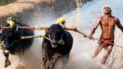 Kambala is now legal in Karnataka, President promulgates ordinance
