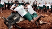 TN: On Pongal day, traditional bull-taming event 'Jallikattu' begins in Madurai