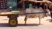 Animals feel the heat too: This picture will touch your heart