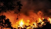 Massive forest fires in Portugal kill 62