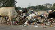 Delhi roads stink with garbage, HC issues notice to civic body heads