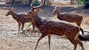 Nine held for poaching deer inside Sathyamangalam Tiger Reserve