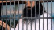HC admits Ram Rahim's plea against rape conviction