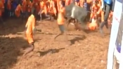 Tamil Nadu: After 3 years, Jallikattu event organized in Madurai