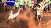 Tamil Nadu: 2 killed, 30 injured during 'Jallikattu' in Pudukottai