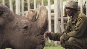 World's last male northern white rhino dies in Ol Pejeta Conservancy