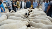 No animal sacrifice in open space on Bakrid rules Uttarakhand HC