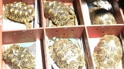 Star treatment for 51 rescued Indian tortoises brought back from Singapore