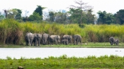 Why elephants form unusual all-male groups ganging up in human-occupied areas