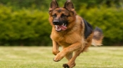 45-year-old woman mauled to death by her pet at Switzerland dog training centre