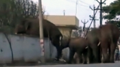Have you ever seen elephants jumping a wall !! Watch this devastating video