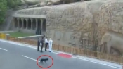 Security breach at Modi-XI summit, black dog spotted at Arjuna Penance monument