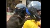 WATCH: Dog wears helmet for safety in Chennai